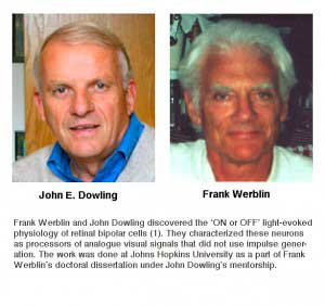 Dowling-Werblin