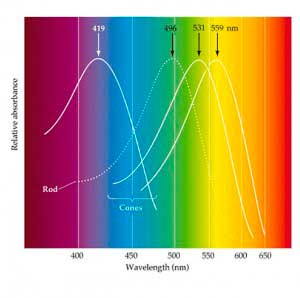Spectrum