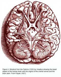 bottombrain