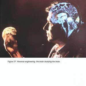 cerebromirando