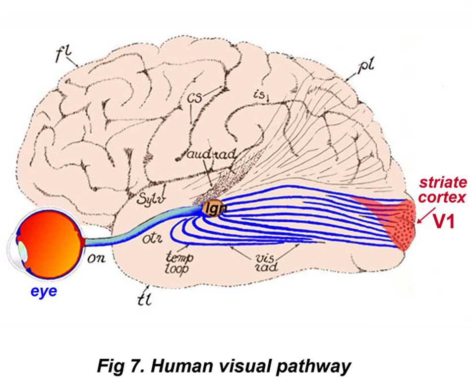 how to grow new brain pathways